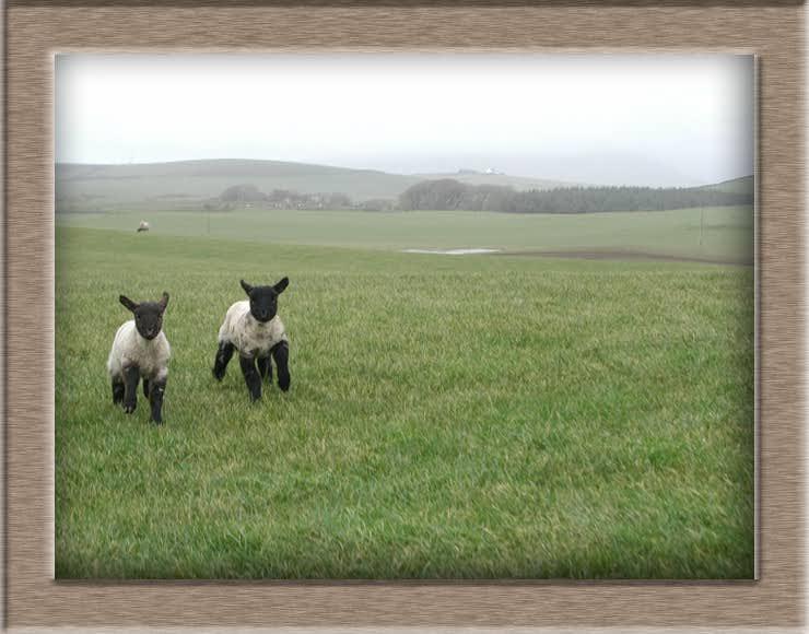 Lamb Photo of Marathon Twins