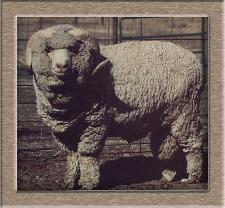 Lamb Photo - Click The Juggernaut to Win